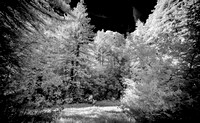 Morgan-Hill-IR_0059