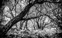 Morgan-Hill-IR_0221