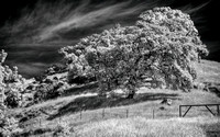 IR-Morgan-Hill_0486