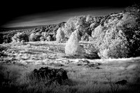 IR-Morgan-Hill_0665