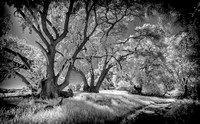 Morgan-Hill-IR_0307