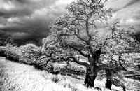 Morgan-Hill-IR_0196